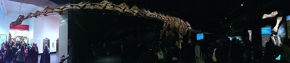 AMNHTitanosaur