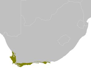 Southern black korhaan - Image: AT1202 map