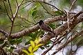 A Bird in Wilpattu National Park 06.jpg