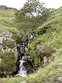 A fruitful Rowan by a waterfall - geograph.org.uk - 522423.jpg