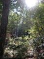 A passeggio nel Bosco...le mie scarpinate - panoramio.jpg