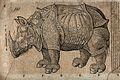 A rhinoceros. Woodcut after C. Gessner. Wellcome V0021201.jpg
