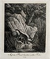 A wild cat lying in wait for prey on a rock near a river. Et Wellcome V0021067ER.jpg