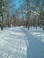 A winter forest in the North-West of Sakhalin. 5.jpg