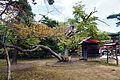 Abashiri-jinja09s3.jpg
