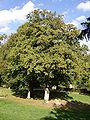 Abbaye des Vaux-de-Cernay Park 05.jpg