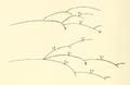 Absidia glauca Hagem - Skrifter udgivne af Videnskabsselskabet i Christiania - 1907 - no. 7, p. 44, fig. 19.png