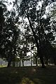 Acharya Jagadish Chandra Bose Indian Botanic Garden - Howrah 2011-01-08 9715.JPG