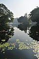 Acharya Jagadish Chandra Bose Indian Botanic Garden - Howrah 2011-01-08 9734.JPG
