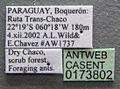 Acromyrmex rugosus casent0173802 label 1.jpg