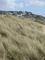 Across the dunes to Marazion - geograph.org.uk - 778466.jpg