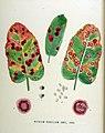 Aecidium rubellum — Flora Batava — Volume v18.jpg