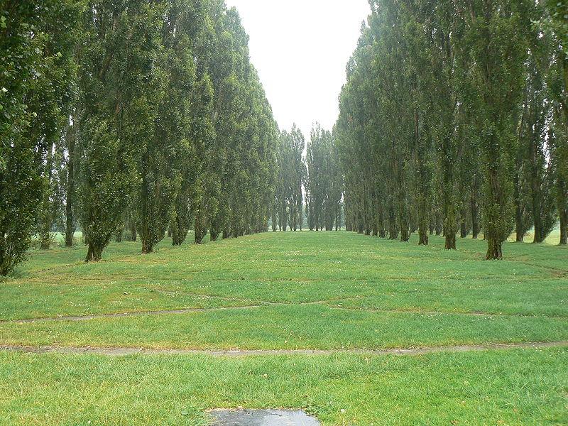 La Cathédrale verte au sol