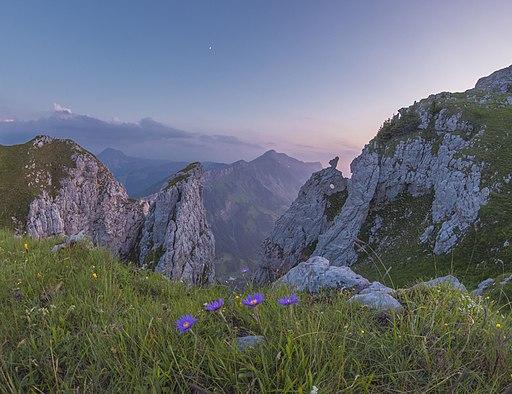 Alpenastern beim Felsdurchbruch südlich des Schibengütsch