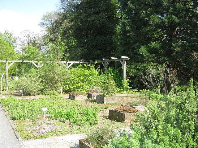File:Alter Bot. Garten Gö 05.JPG - Wikimedia Commons