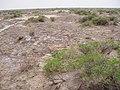 Alxa Zuoqi, Alxa, Inner Mongolia, China - panoramio (67).jpg