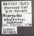 Anergates atratulus casent0010835 label 1.jpg