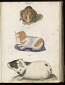 Animal drawings collected by Felix Platter, p2 - (122).jpg