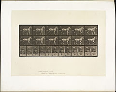 Animal locomotion. Plate 585 (Boston Public Library).jpg
