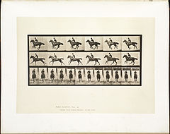 Animal locomotion. Plate 632 (Boston Public Library).jpg