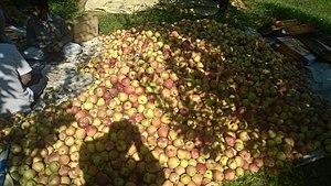 Ganderbal district - Image: Apples of Ganderbal