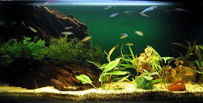 Einfaches Haus-Aquarium (80x40x30 cm, 96 l)