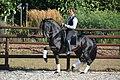 Arabo-Friesian stallion - Dark Vredestichter 022.jpg