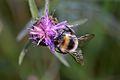 Araignées, insectes et fleurs de la forêt de Moulière (Les Chirons Noirs) (28423386884).jpg
