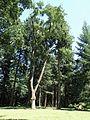 Arboretum Bukovina 444.jpg