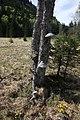 Arbre et champignons aux Entrecôtes - img 37973.jpg