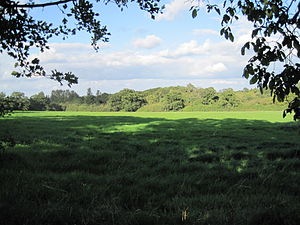 Arkley Lane and Pastures - Field next to Arkley Lane