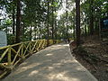 Around Athirappilly Falls during Dec2011 0369.JPG