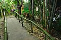 Artificial Forest - Resources of Jharkhand Gallery - Ranchi Science Centre - Jharkhand 2010-11-27 8105.JPG