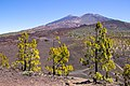 At Teide National Park 2019 087.jpg