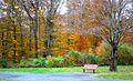 Autumn Foliage in Natirar, New Jersey.jpg
