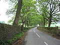 Avenue of beeches, Pale Lane, Carleton-in-Craven, Yorkshire - geograph.org.uk - 169246.jpg