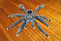 Avicularia geroldi - male - Image 2.JPG