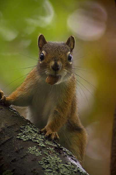 File:Baby squirrel in tree 2.jpg