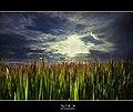 Backlit nature.jpg
