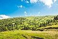 Bajkovita brda Kopaonika.jpg