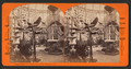 Banana trees, Woodward's Gardens, San Francisco, Cal, from Robert N. Dennis collection of stereoscopic views.png