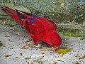 Bangabandhu Sheikh Mujib Safari Park 32.jpg