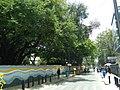 Bangalore Church street trees 1.jpg