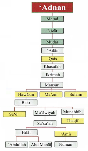 Banu 'Amir - Ancestry of the Banu 'Amir