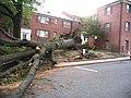 Barcroft 4200 Columbia Pike Downed Tree (7536693852).jpg
