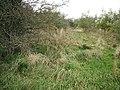 Barleyside Wood - geograph.org.uk - 1534909.jpg