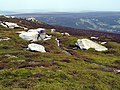 Barrow Stones path to Grinah Stones - geograph.org.uk - 457676.jpg
