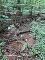 Battle Creek Cypress Swamp 53.jpg