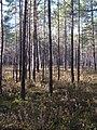 Baturinskaya Sogra.jpg