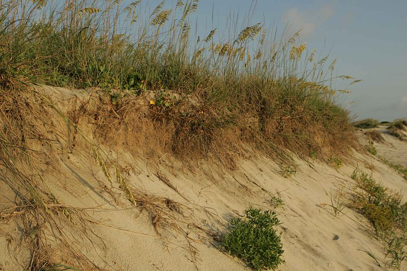 File:Beach erosion at Pea island national wildlife refuge.jpg